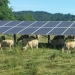 Picture of Solar Panel and Sheep